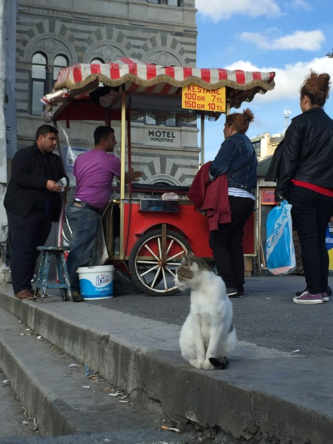 Cat and street vendor, Istanbul