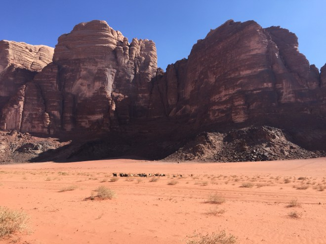 Goats wandering around in Wadi Rum