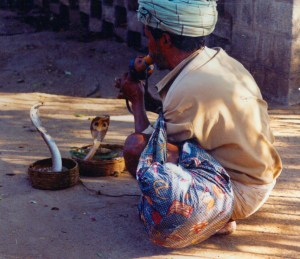 Snake Charmer at the Palace Bangalore