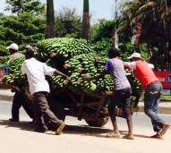 Handcart full of bananas being pushed round the Clock Tower roundabout on Makongoro Road, Mwanza.