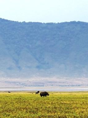 Black rhino in the Ngorogoro Crater.