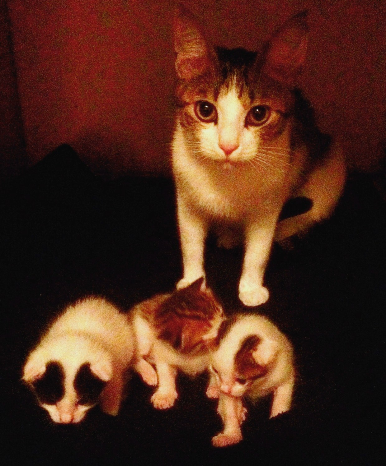 Kerouac and the Kittens
