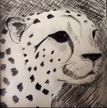Sketch of a cheetah in the Serengeti, Tanzania
