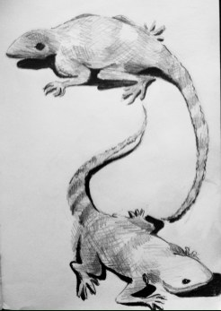 Sketch of two agama lizards basking in the sun in the grounds of Isamilo International School in Mwanza, Tanzania