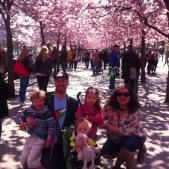 Ali and family under the blossom trees in Kungsträdgården, in Stockholm, Sweden (2014)
