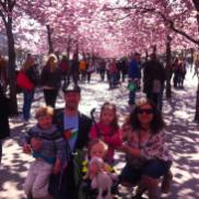 Ali and family under the blossom trees in Kungsträdgården, in Stockholm, Sweden (2014)