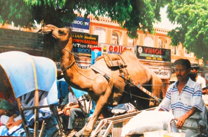 Camels, Cycle-rickshaws, bikes, cars and buses on a packed road in Jaipur, India