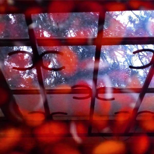 Window reflected in soaking beans