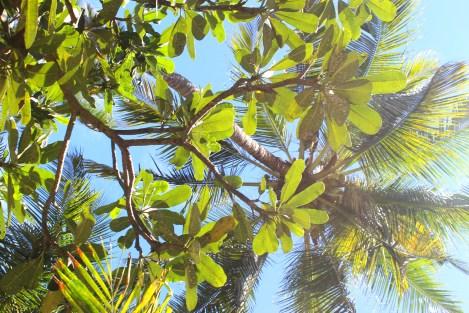 Frangipani and palm trees