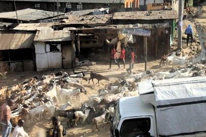 Goat herders in the slums of Nairobi