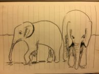 My sketches of the elephant at the the David Sheldrick Wildlife Trust in Nairobi from my Kenyan sketchbook