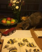 My cat Modraniht lending a helping paw to my bee sketching