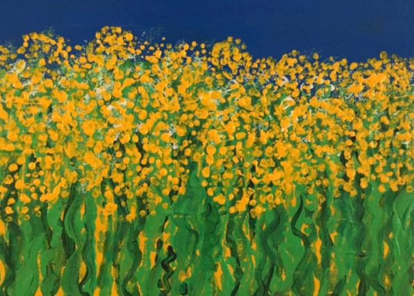 A field of rape seed in Sweden