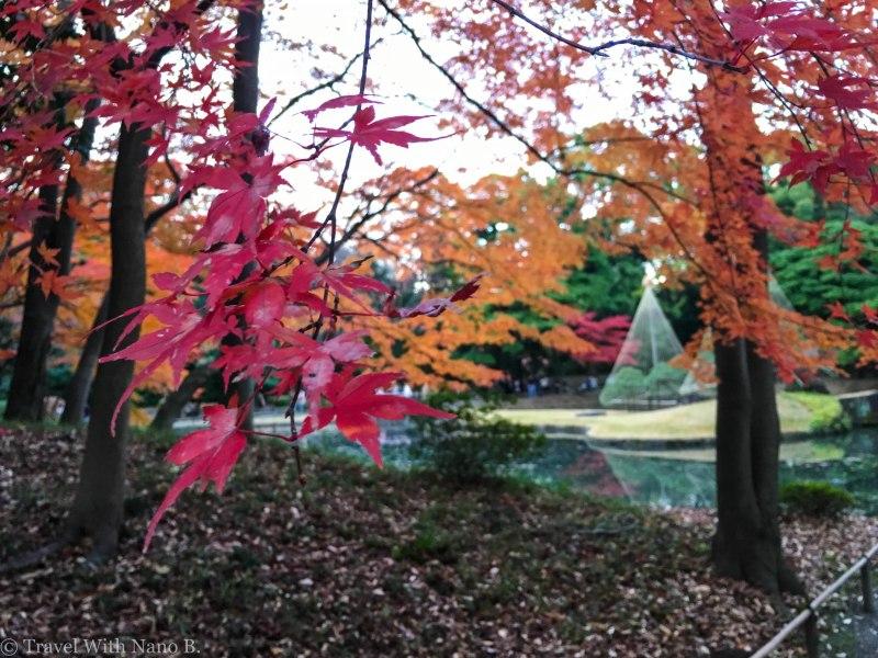 best-gardens-in-tokyo-7 (2)