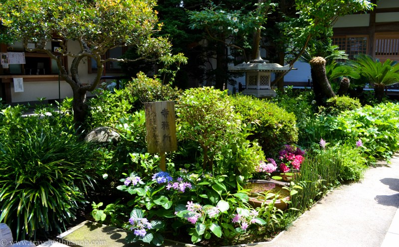 hydrangea-in-kamakura-japan-2