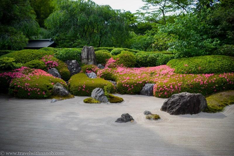 hydrangea-in-kamakura-japan-39