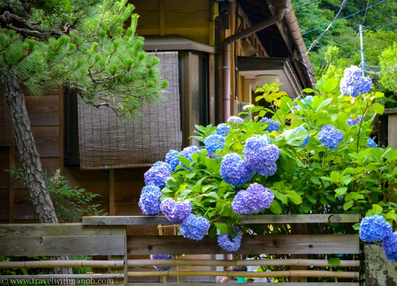 hydrangea-in-kamakura-japan-41