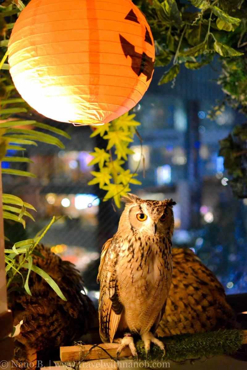owl-cafe-tokyo-20