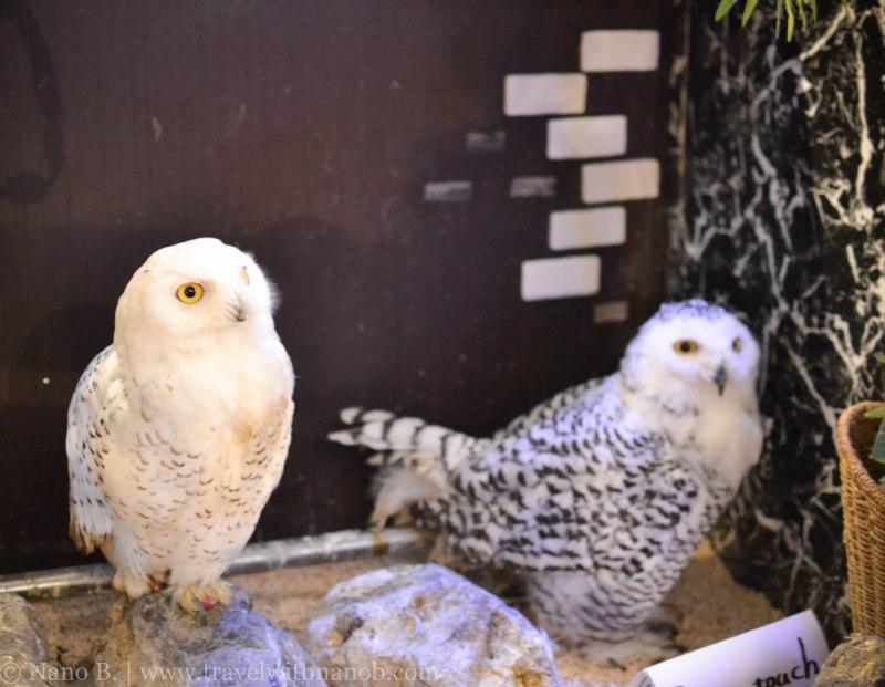 owl-cafe-tokyo-4