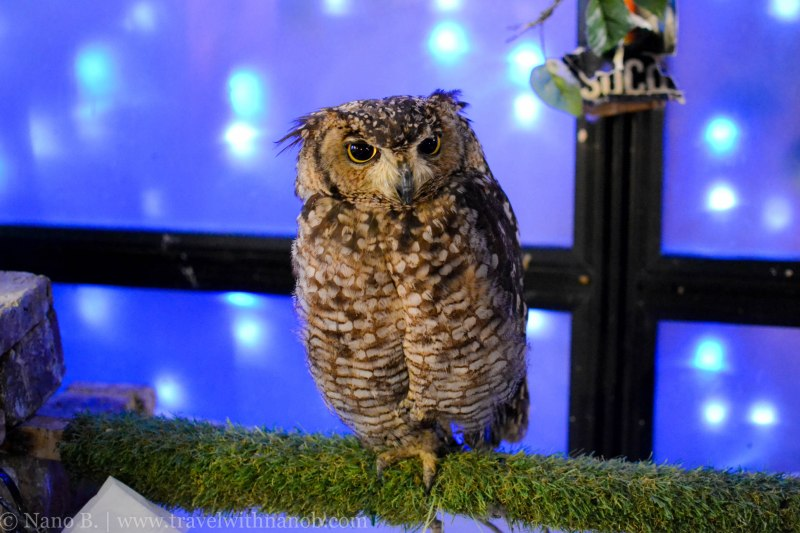 owl-cafe-tokyo-6