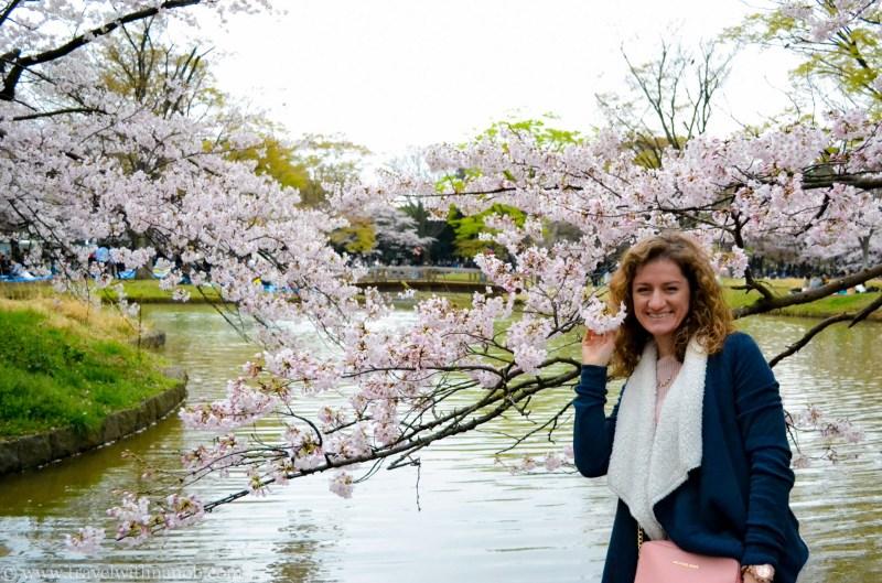 cherry-blossom-tokyo-36
