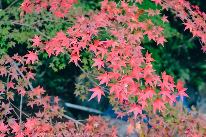 ryozenji-kyoto