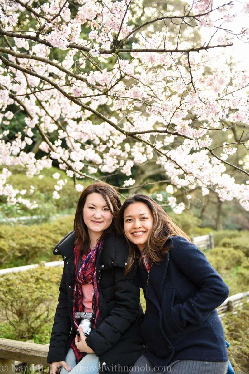 cherry-blossom-tokyo-48