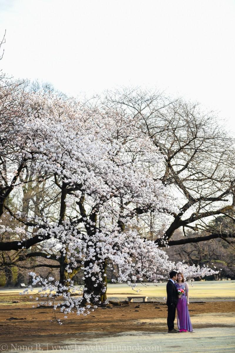 cherry-blossom-tokyo-76