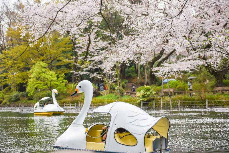 inokashira-park-1