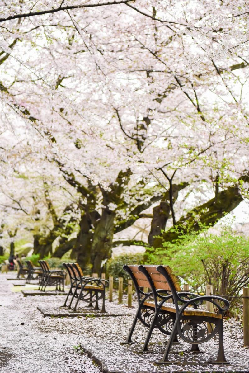 inokashira-park-10