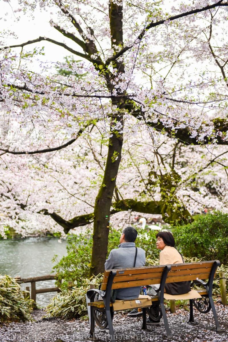 inokashira-park-13