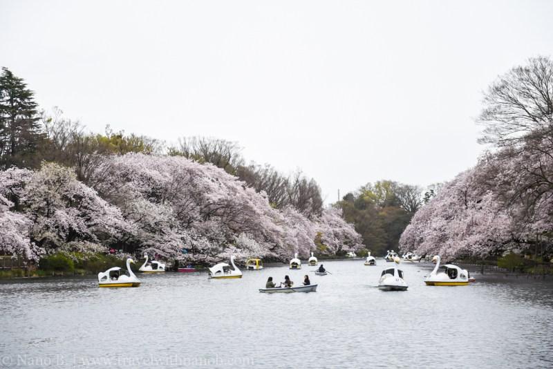 inokashira-park-16