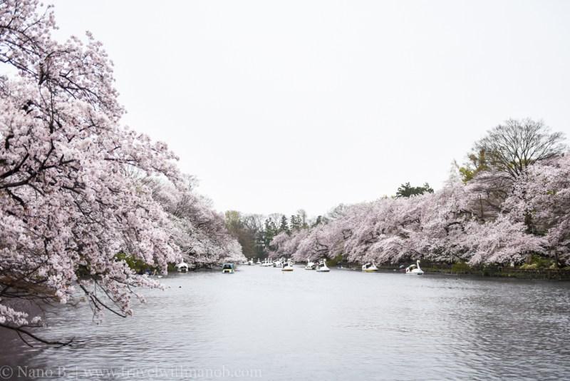 inokashira-park-19