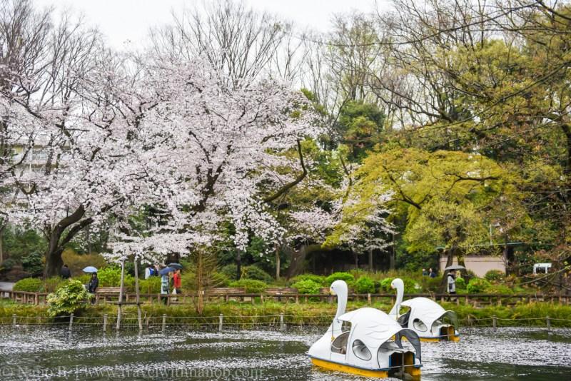 inokashira-park-2