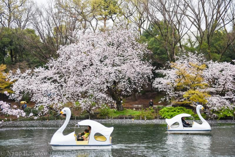 inokashira-park-6