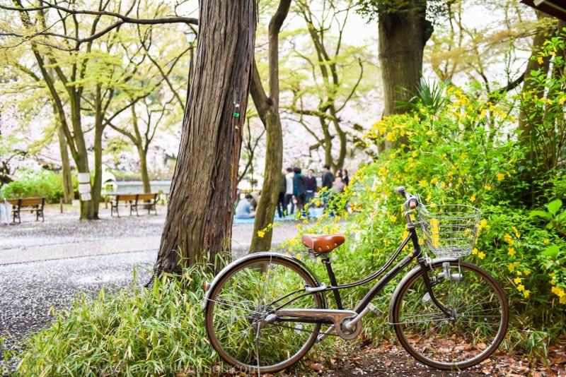 inokashira-park-9