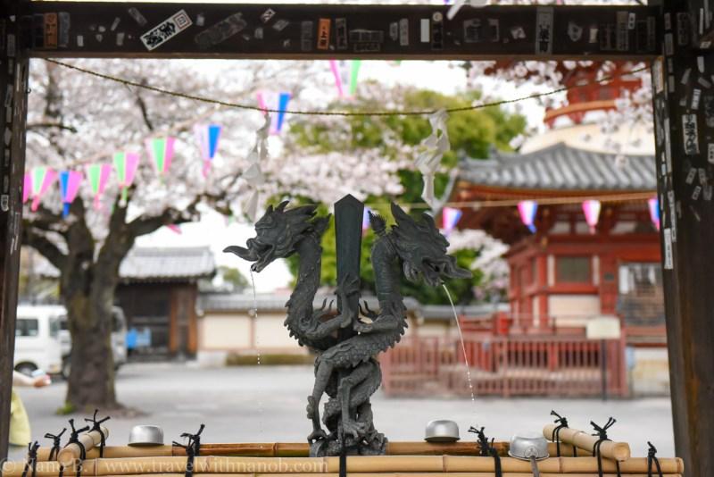 Kawagoe-Cherry-Blossom-80