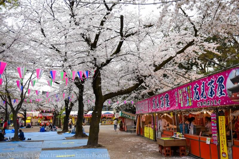 Kawagoe-Cherry-Blossom-86