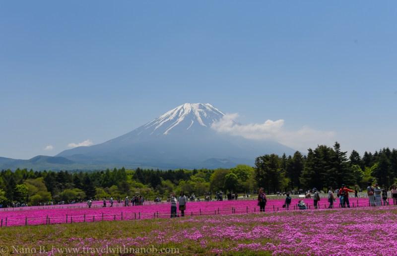Fuji-Shibazakura-Festival-10