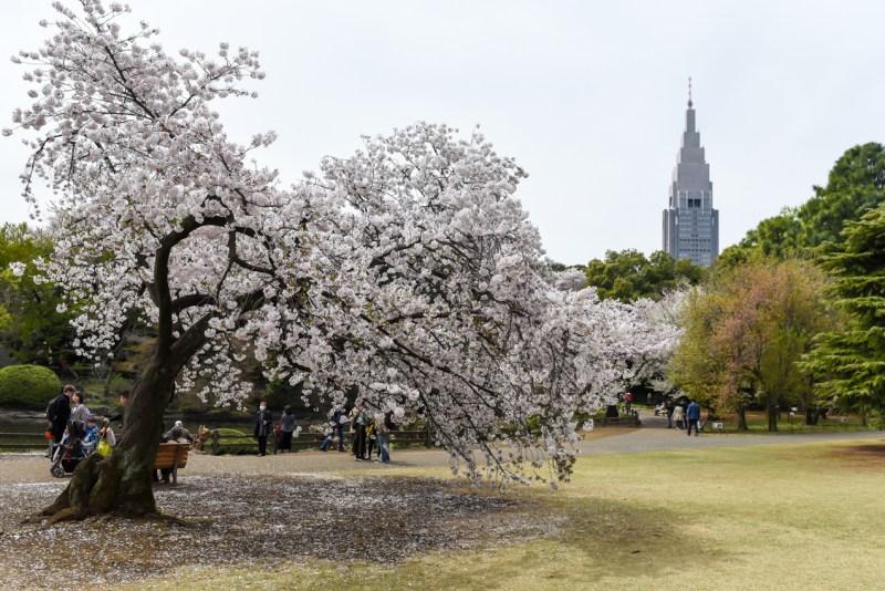 shinjuku-gyoen-garden-tokyo-15