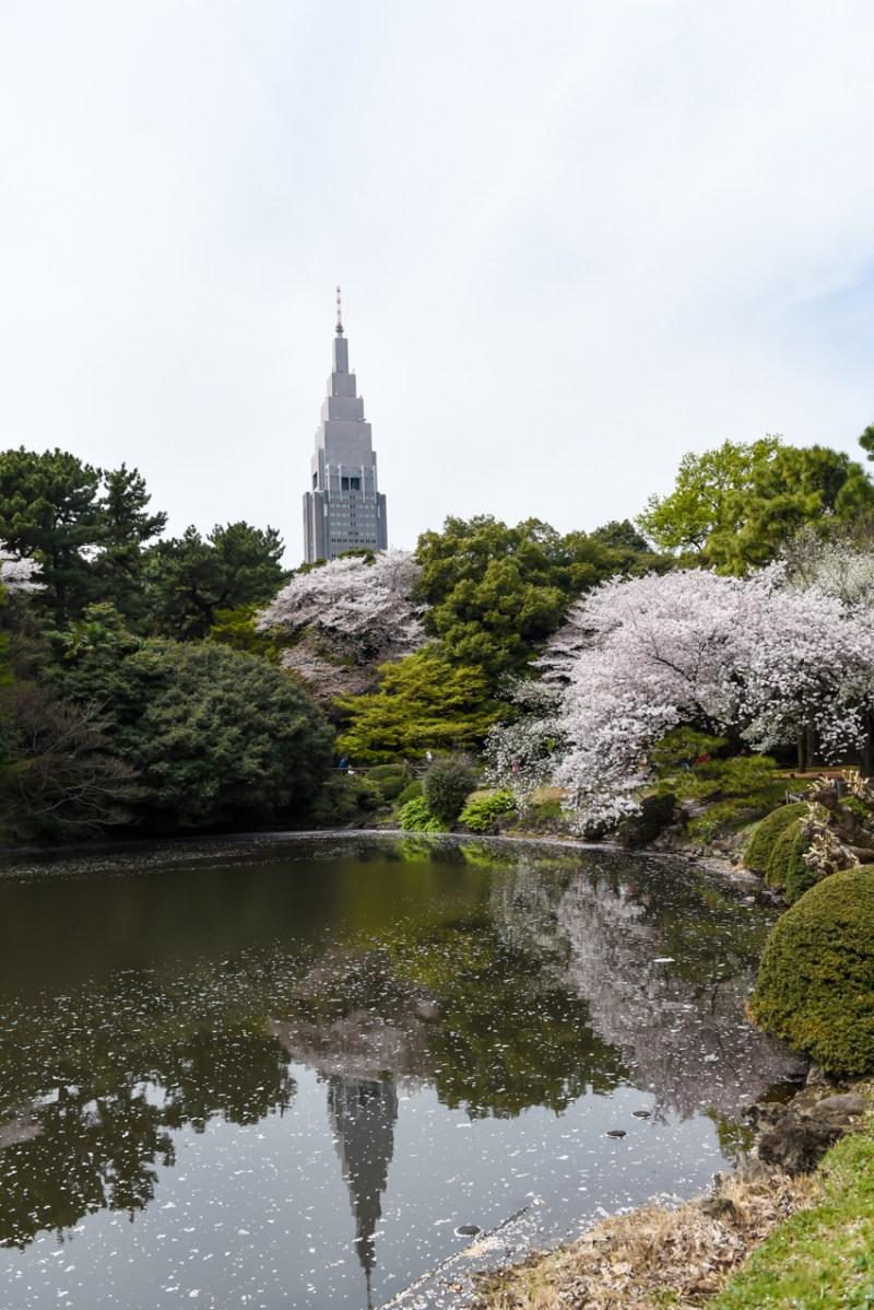 shinjuku-gyoen-garden-tokyo-16