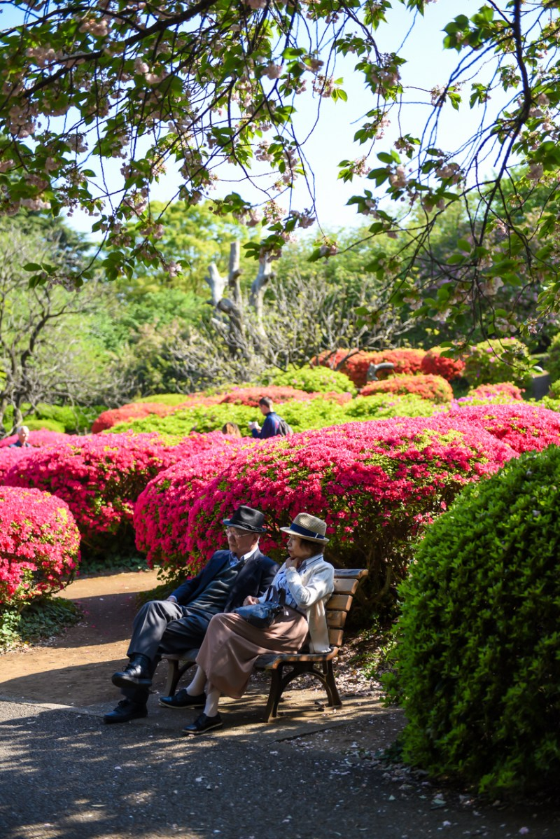 shinjuku-gyoen-garden-tokyo-46