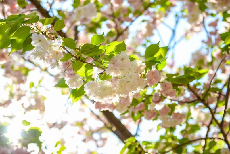 shinjuku-gyoen-garden-tokyo-59