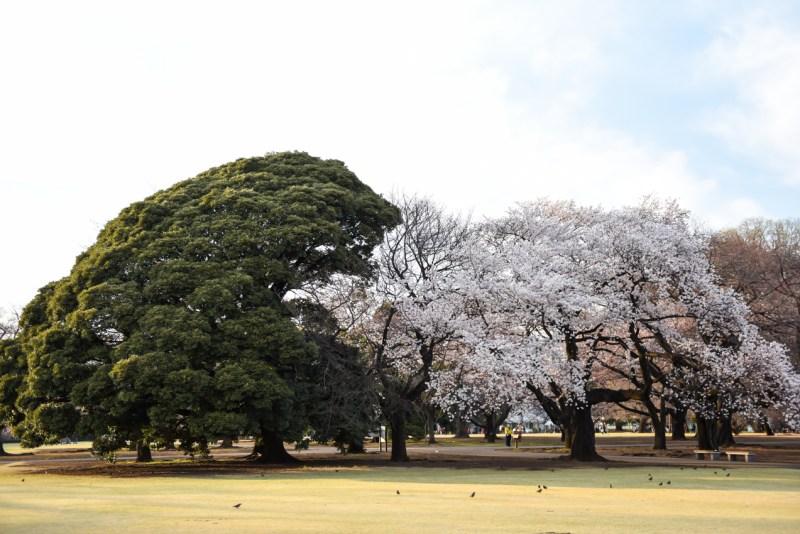 shinjuku-gyoen-garden-tokyo-6
