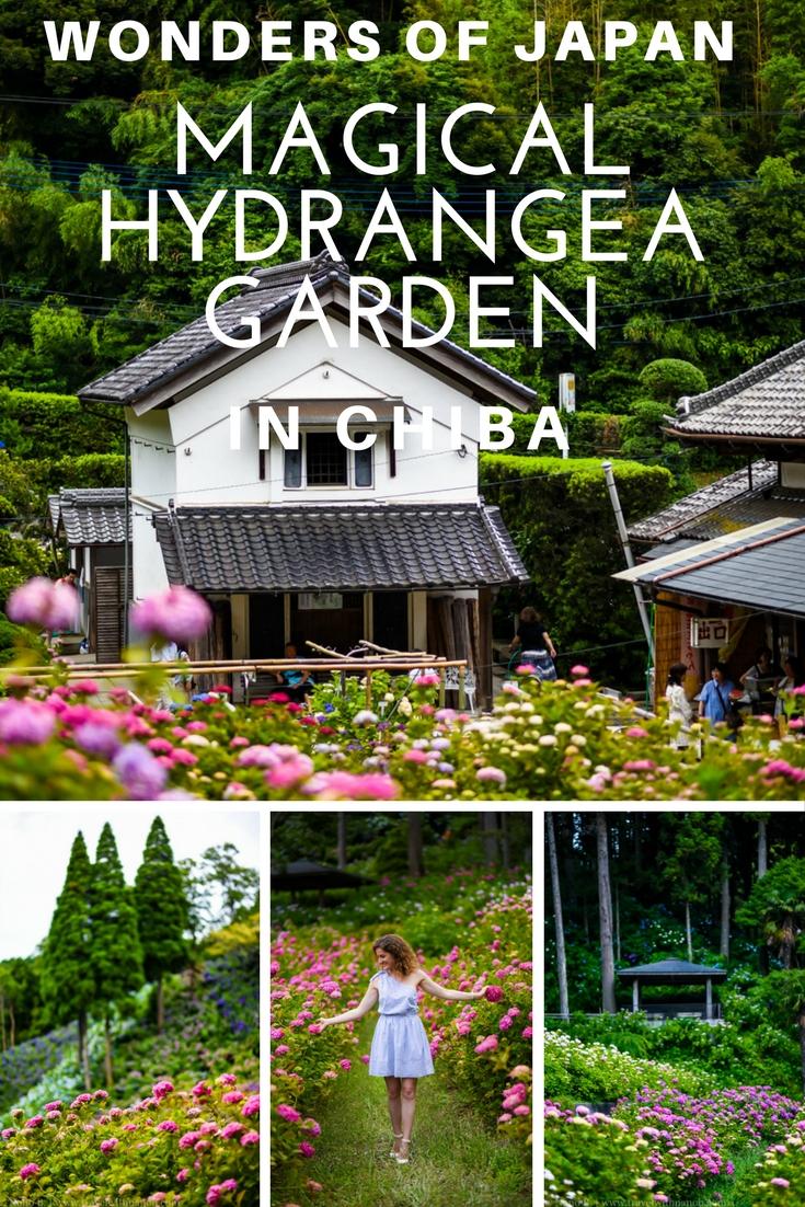 Magical HydrangeaGarden in Chiba, Japan on www.travelwithnanob.com