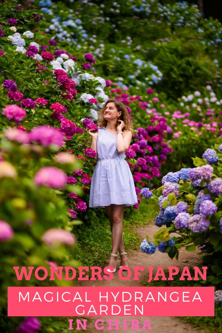 Magical HydrangeaGarden in Chiba, Japan on www.travelwithnanob.com_