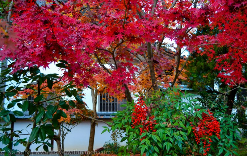 kyoto-autumn-leaves-18