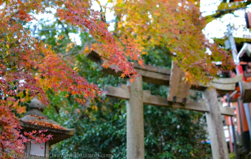 kyoto-autumn-leaves-38