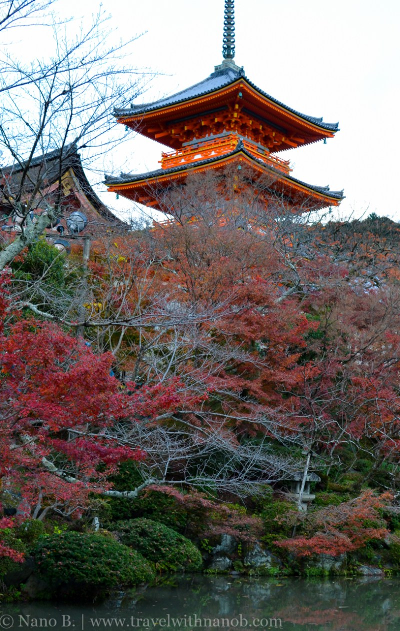 kyoto-autumn-leaves-60