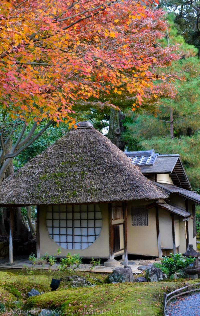 kyoto-autumn-leaves-61
